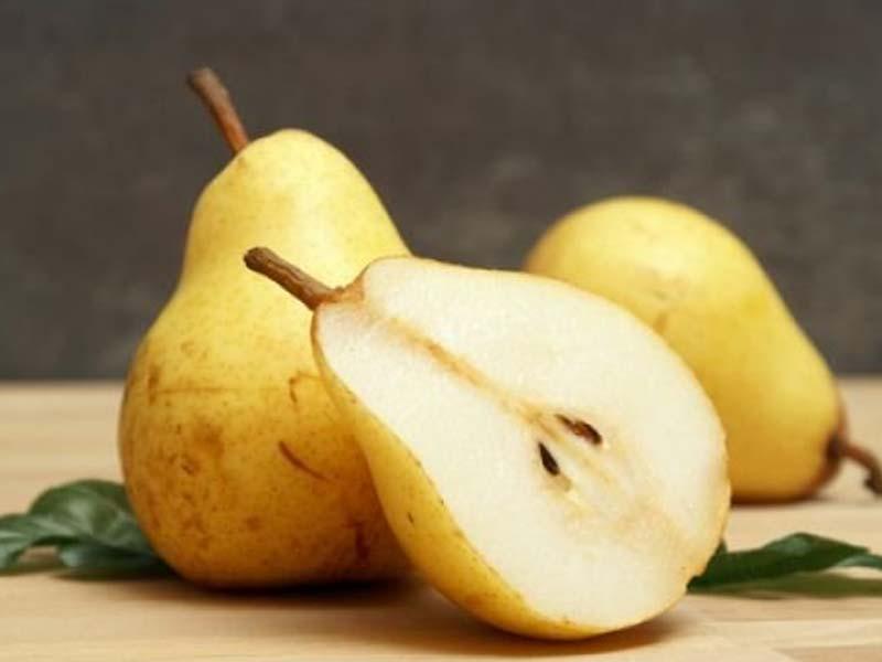 sadnice kruska kiferova citronka